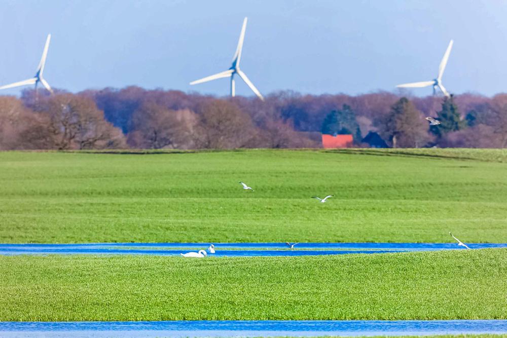 Felder bei Busdorf im Kreis Plön, mit Blick auf den Windpark Alt Bokhorst.