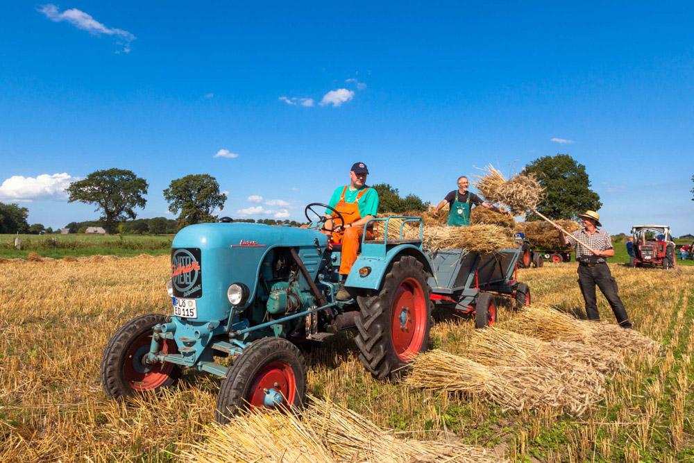 Die Freunde alter Landmaschinen lassen historische Landarbeit leendig werden.