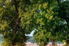 Raum für alte Bäume, Wildpflanzen und Kleingetier.