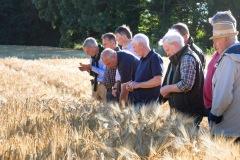 Feldbegehung in Rendswühren. Landwirte tauschen sich aus.