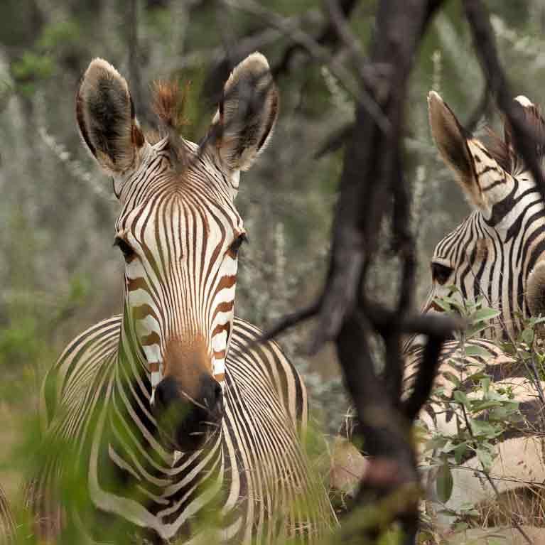 21°49´22,42´´ S – 16°11´23,93´´ O – Namibia Farm & Wildlife – Okapaue