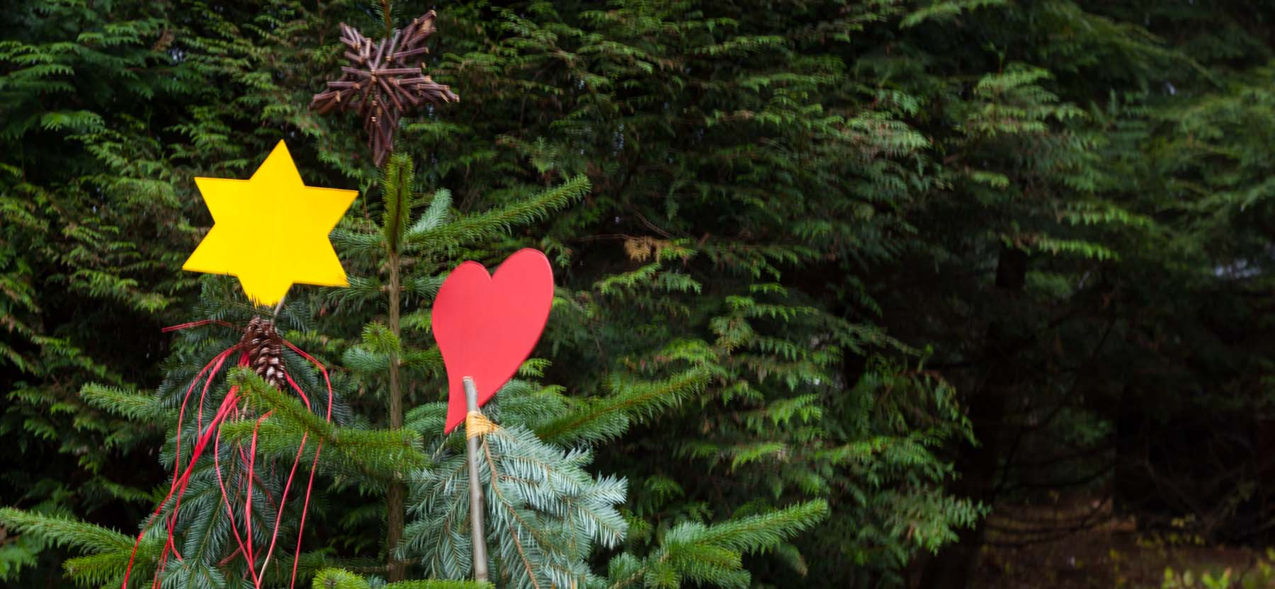 Waldweihnacht mit historischen Elementen – bei der 17. Waldweihnacht im Erlebniswald Trappenkamp führt die Reise dieses Jahr neben Märchenpfad und Wichtelwald ins Mittelalter