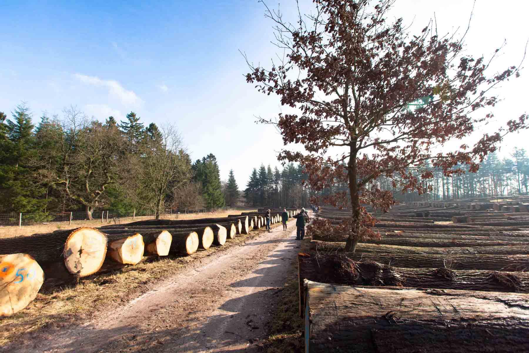 Schleswig-Holstein / Die 42. Wertholzversteigerung in Daldorf schloss mit stabilen Preisen und einem Spitzenergebnis im Abverkauf