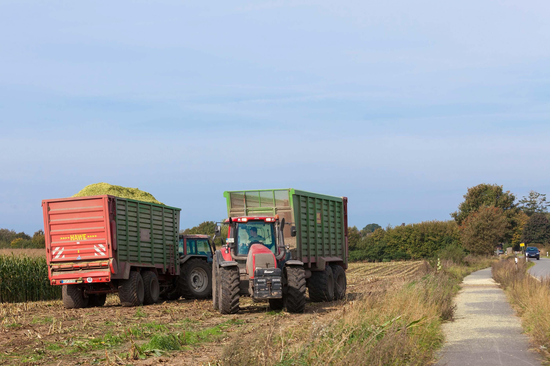 Die Maisernte läuft auf Hochtouren – es wird eng auf manchen Gemeindestraßen und den Wirtschaftswegen