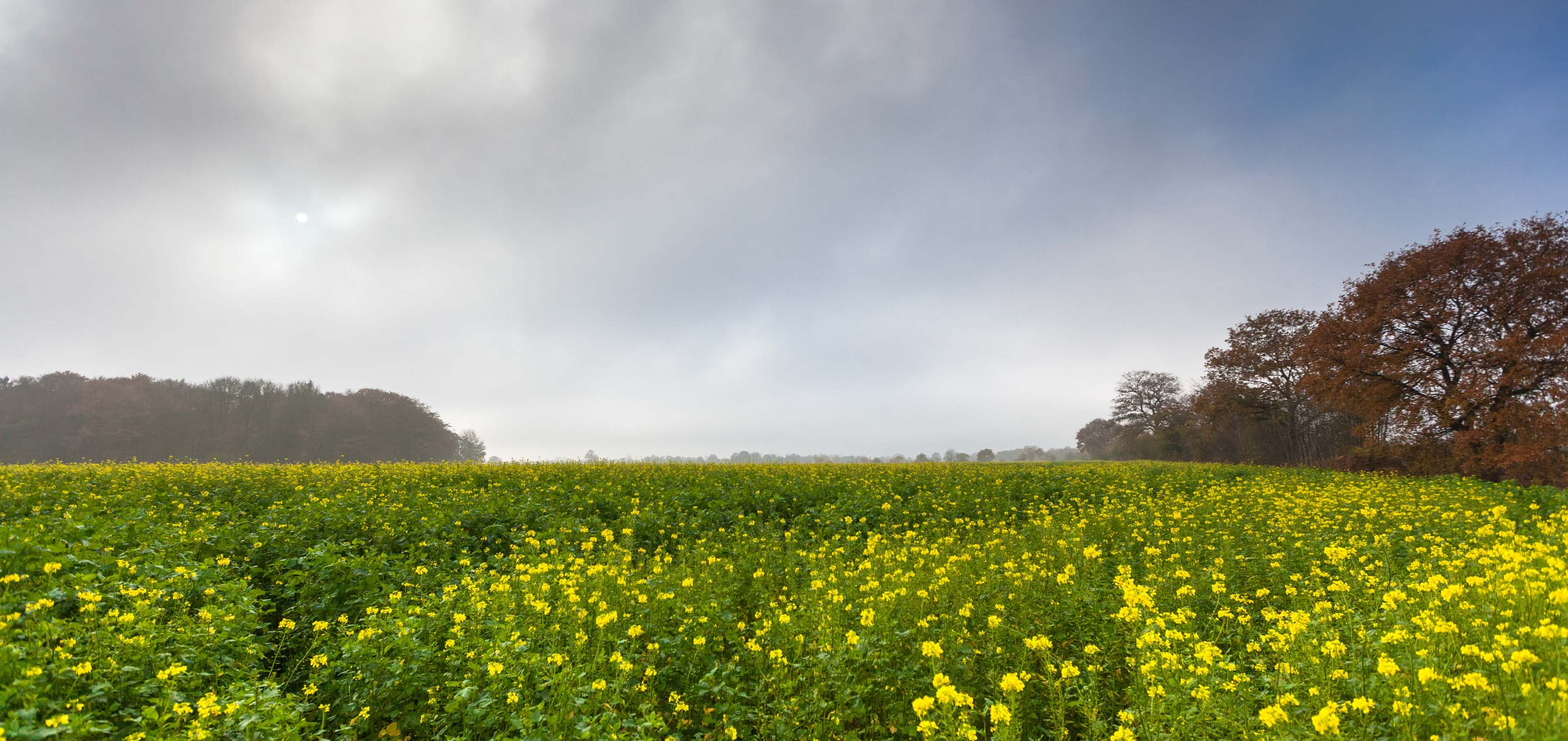 Stellungnahme des Kreisumweltamtes könnte Bönebütteler Windkraftplanung umwerfen
