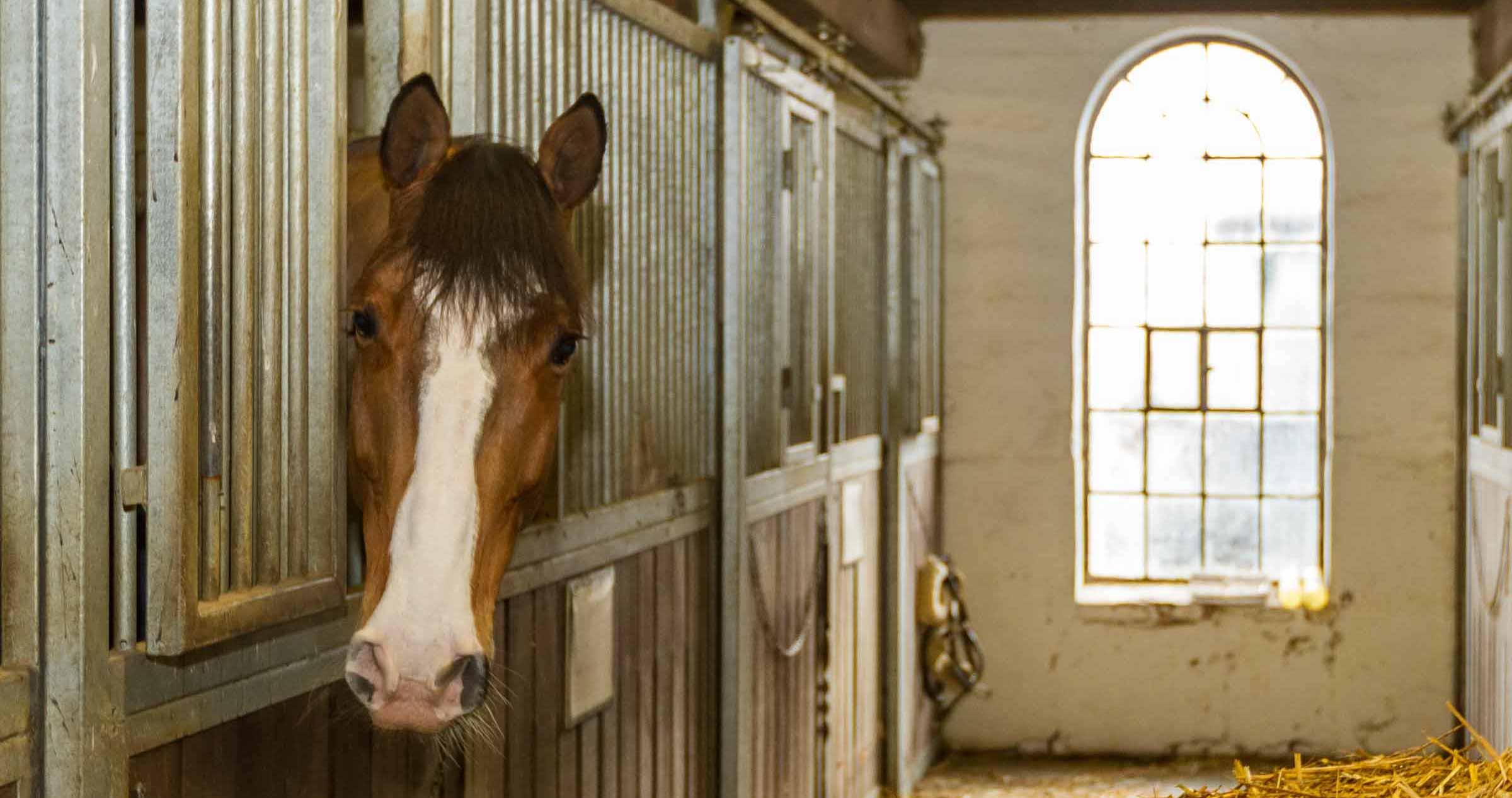 Pferdeseuche Rotz löst keine Panik aus. Trotzdem sind die Pferdehalter achtsam. Veranstaltungen wurden abgesagt