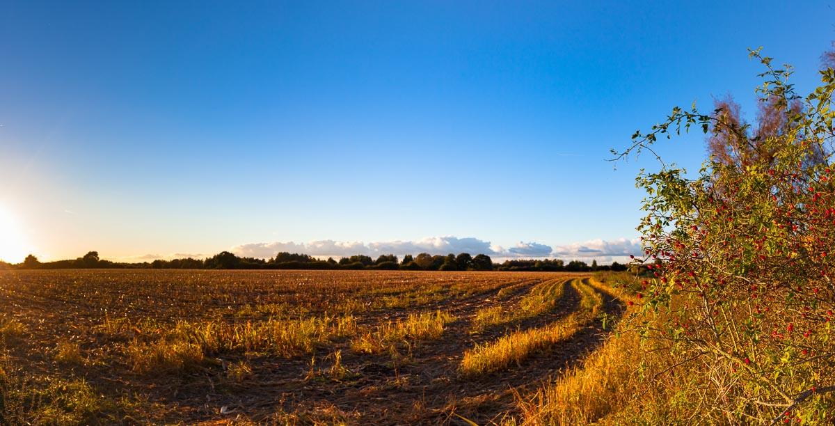 Die Maisernte ist vorbei und auch die Herbstbestellung der Felder geht dem Ende zu. Damit kehrt Ruhe auf den Feldern, Wiesen und Landstraßen ein
