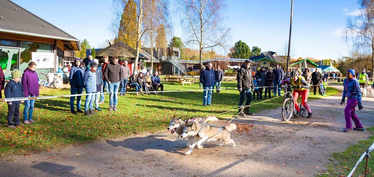 Zughunde- und Schlittenhundefreunde erlebten ein stürmisches Auftaktwochenende zur Rennsaison im Erlebniswald Trappenkamp. Nach einer stürmischen Nacht entschädigte am Sonntag ein goldener Herbstsonntag für eine unruhige Nacht.