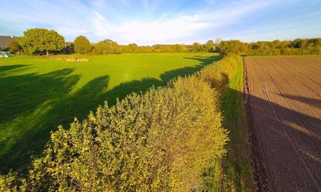 Schleswig-Holsteins schönste Knicks sind gefunden. Drei Knicks aus ganz Schleswig-Holstein haben es aufs Siegertreppchen geschafft, darunter ein Knick von Heiner Staggen aus Schipphorst im Kreis Plön