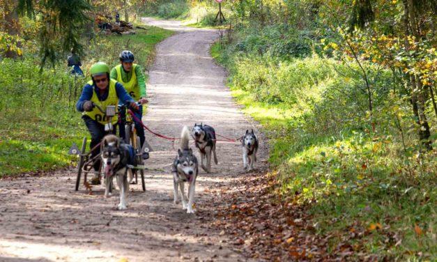 Im Erlebniswald Trappenkamp versammelten sich Schlittenhundehalter und Teilnehmer freier Rennklassen mit rund 300 Hunden zu einem spannenden Rennwochenende.