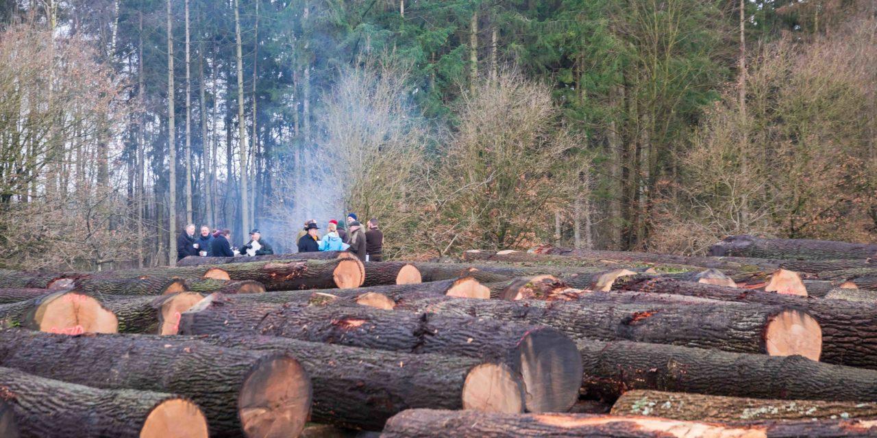 Das 48. Holzschaufenster des Nordens ist geschlossen. 3.600 Festmeter Wertholz wurden verkauft.