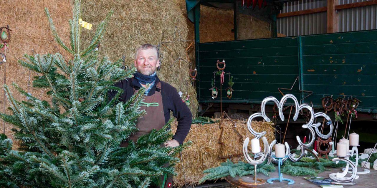 Die Nordmanntanne bleibt die Favoritin unter den Weihnachtsbäumen